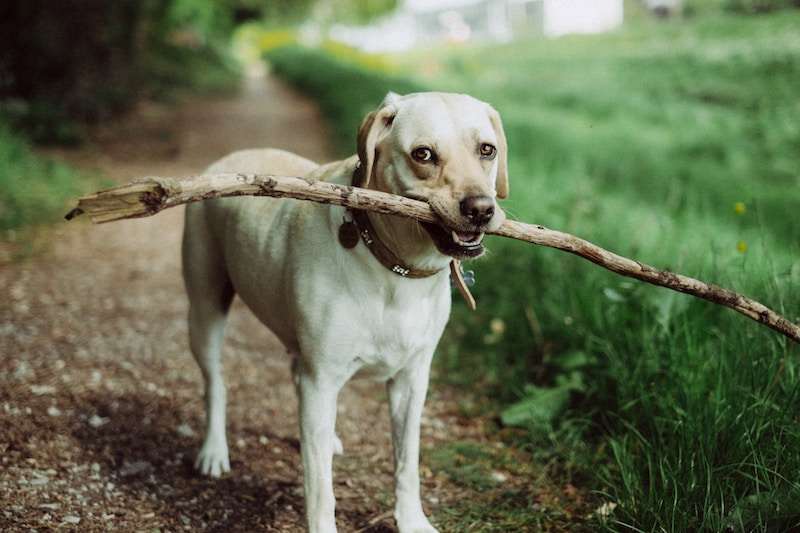 Dog friendly off leash parks in portland