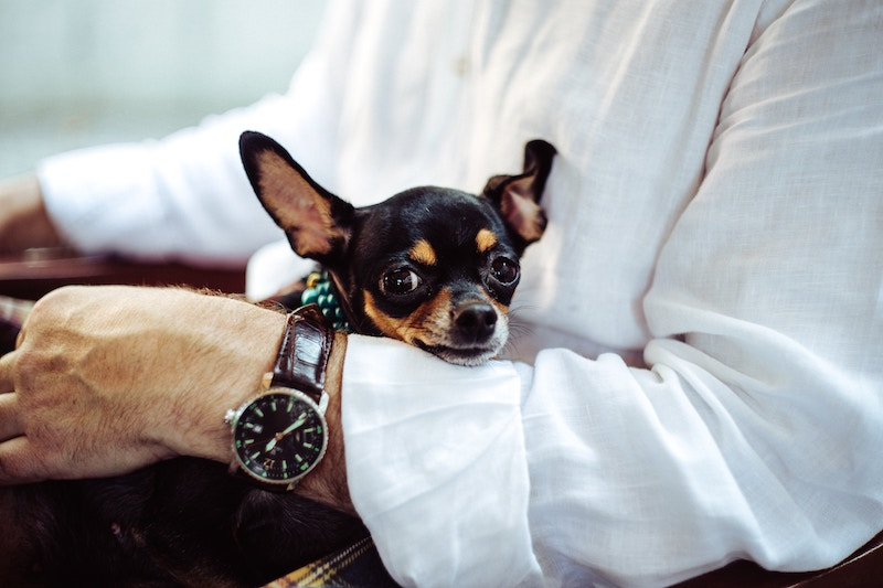 dog-friendly businesses in portland