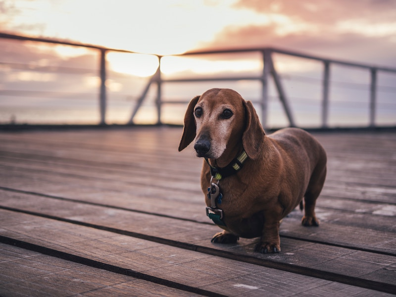 Portland Events for Dogs